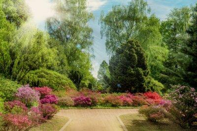 Fototapete Schöner Garten im Frühling