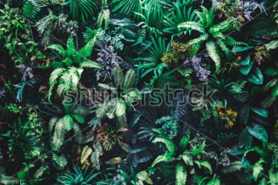 Fototapete Schöner Naturhintergrund des vertikalen Gartens mit tropischem grünem Blatt