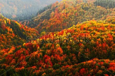 Fototapete Schöner orange und roter Herbstwald, viele Bäume auf den orange Hügeln, Nationalpark der Böhmischen Schweiz, Tschechische Republik.