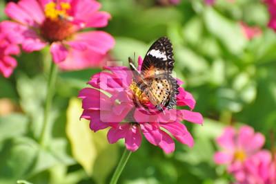 Schöner Schmetterling Mit Blumen Schmetterling Saugte Von Den