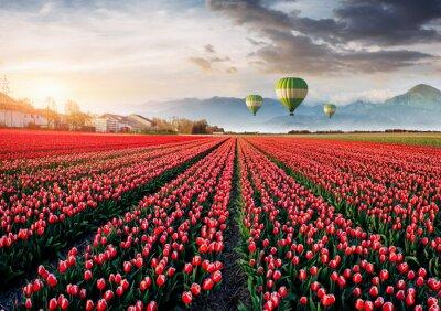 Fototapete Schönes Feld der roten Tulpen in Holland. Ballons im Hintergrund. Fantastisches Frühlingsereignis