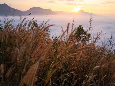 Fototapete Schönes Landschaftslot Nebel Phu Thok