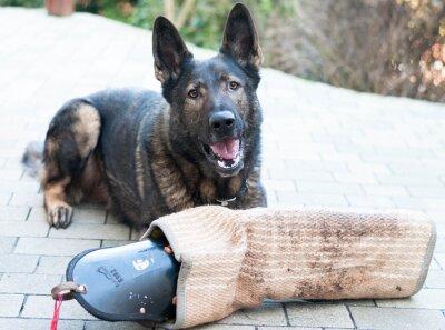 Fototapete Schutzhund