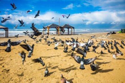 Fototapete Schwarm von Tauben ist es laut geht
