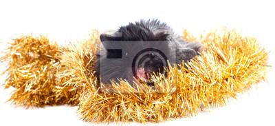 schwarz Hamster in Gerland