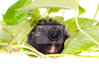 schwarz Hamster in grünen Blättern