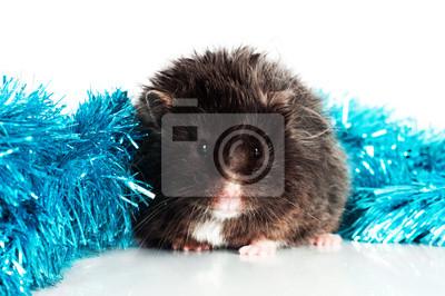 schwarz Hamster mit Weihnachten gerland