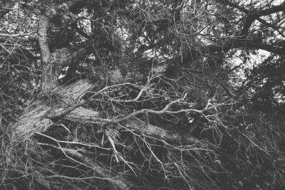 Fototapete Schwarz und weiß close up auf twisted blattlosen Zweige. Organische b