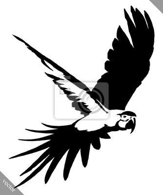 Schwarz Weiss Farbe Zeichnen Papagei Vogel Vektor Illustration