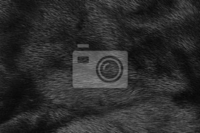 Fototapete Schwarze Pelzbeschaffenheit