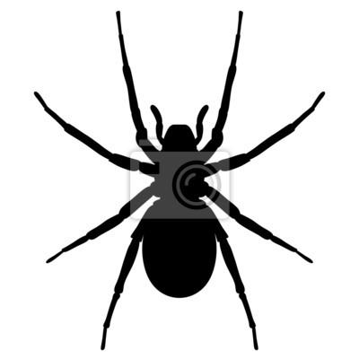 schwarze spinne von oben vektor und freigestellt fototapete fototapeten scarey unruhig. Black Bedroom Furniture Sets. Home Design Ideas