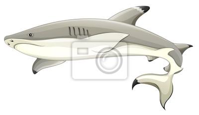 Schwarzspitzen Hai