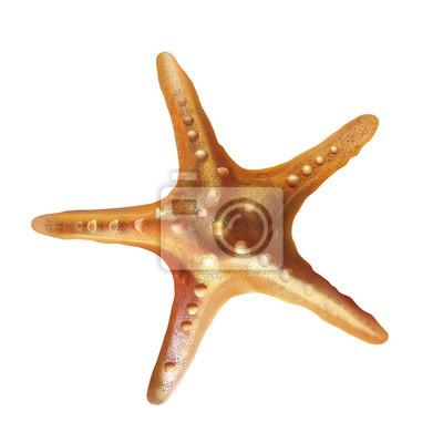 Sea Starfish-Abbildung