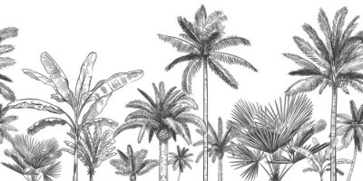 Fototapete Seamless horizontal tropical background. Hand drawn palm trees, sketch exotic tropic jungle leaves and paradise palm tree vector wallpaper illustration. Exotic palm tree botanical, rainforest foliage