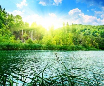 Fototapete See in den tiefen Wald