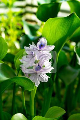 Seltene tropische Orchideen