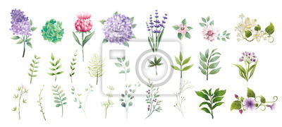 Fototapete set collection green leaves and flower watercolor style for printing,wedding,decorate,flower shop,business card vector illustration
