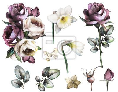 Set elemente von rose und narzissen sammlung garten und wilde