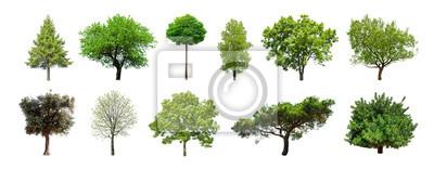 Fototapete Set grüne Bäume getrennt auf weißem Hintergrund. Verschiedene Arten der Baumsammlung
