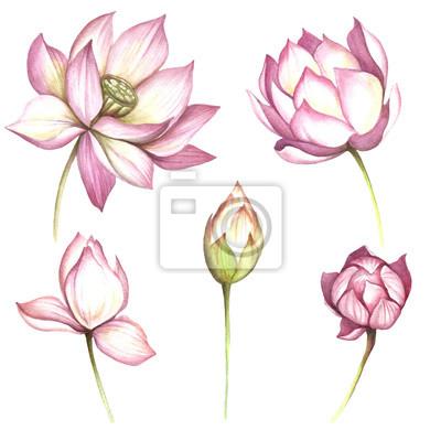 Set Mit Blumen Lotus Hand Zeichnen Aquarell Illustration