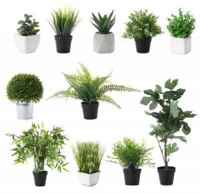 Fototapete Set of artificial plants in flower pots isolated on white