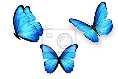 Fototapete set of blue butterflies isolated on white background