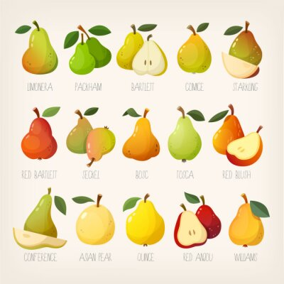 Set of colorful vector pears of different kinds with names.