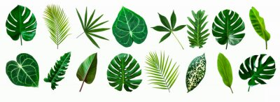 Fototapete set of green monstera palm and tropical plant leaf isolated on white background for design elements, Flat lay