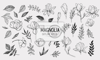 Fototapete Set of magnolia with leaves. Floral elements for design. Vector. Isolated