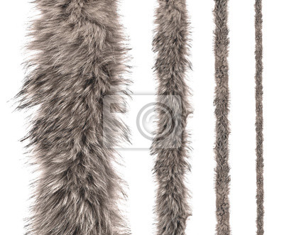 Fototapete set of stripes of gray fur of different sizes on an isolated white background.
