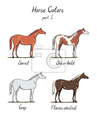 Set pferd farbkarte auf weiß. pferdefell farben mit text ...