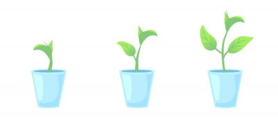 Set three potted plants. Gardening home design elements. Phases plant growing. Growth Infographic and evolution concept. Vector illustration front view on isolated white background.