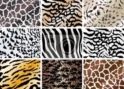 Set Tiere Haut Hintergründe