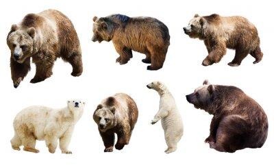 Fototapete Set viele Bären. Isolierte über weiß