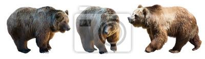 Fototapete Set von 3 braunen Bären über weiß