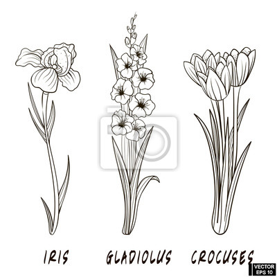 Set Von Blumen Hand Zeichnen Fototapete Fototapeten Krokus Iris