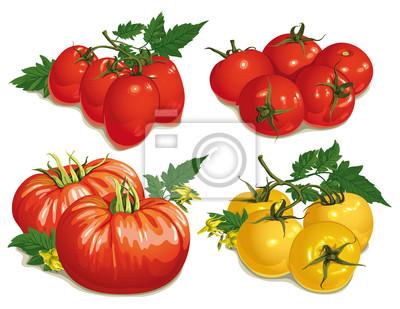 Set von verschiedenen Sorten von Tomaten