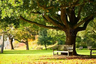 Fototapete Setzen Sie unter dem Baum in den königlichen botanischen Gärten in London auf die Bank