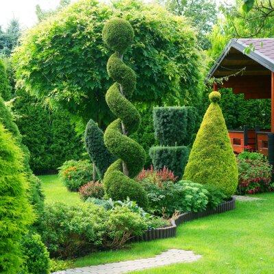 Shorn Zierpflanzen In Einem Garten Fototapete Fototapeten