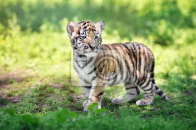 Sibirischen Tiger Cub im Freien im Sommer