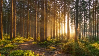 Fototapete Silent Forest in spring with beautiful bright sun rays