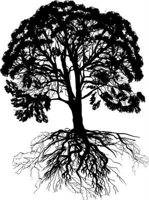 Silhouette Der Großen üppigen Baum Mit Schwarzen Wurzel Fototapete