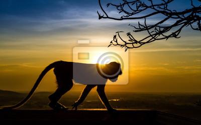 Silhouette eines Affen im Sonnenuntergang
