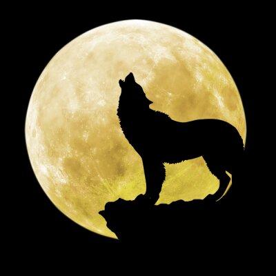 Fototapete Silhouette eines Wolfs vor dem Mond