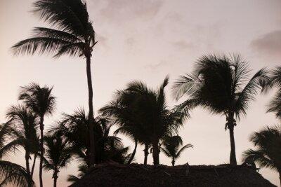 Fototapete Silhouette Palmen bei schöner Sonnenuntergang Zeit