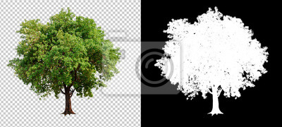 Fototapete single tree on transparent picture background with clipping path, single tree with clipping path and alpha channel on black background