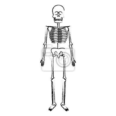 Skelett menschlichen körper knochen medizinische vektor-illustration ...