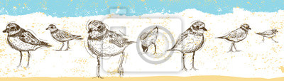 Sketchy Sandpipers