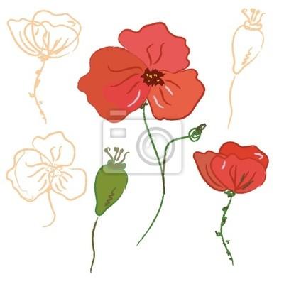 Skizze der Mohnblüte und Samen
