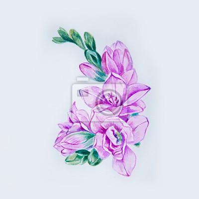 Skizze einer schönen lila freesia blume auf einem weißen hintergrund ...